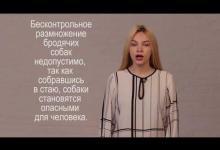 Стерилизация собак. Видеоурок для учащихся 15-18 лет.