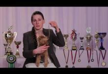 Безопасное поведение при встрече с собакой. Видео урок для учащихся 7-11 лет.