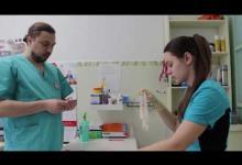 Стерилизация собак. Видеоурок для учащихся 11-14 лет.